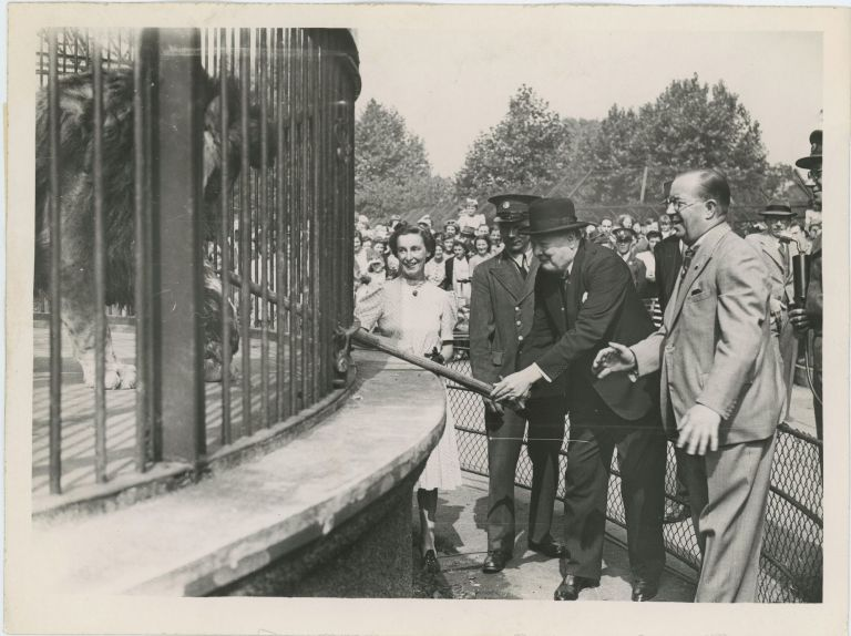 An original wartime press photograph of Prime Minister Winston S. Churchill on 26 July 1943 feeding Rota, the lion given to him by the London Zoo